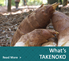 what's TAKENOKO