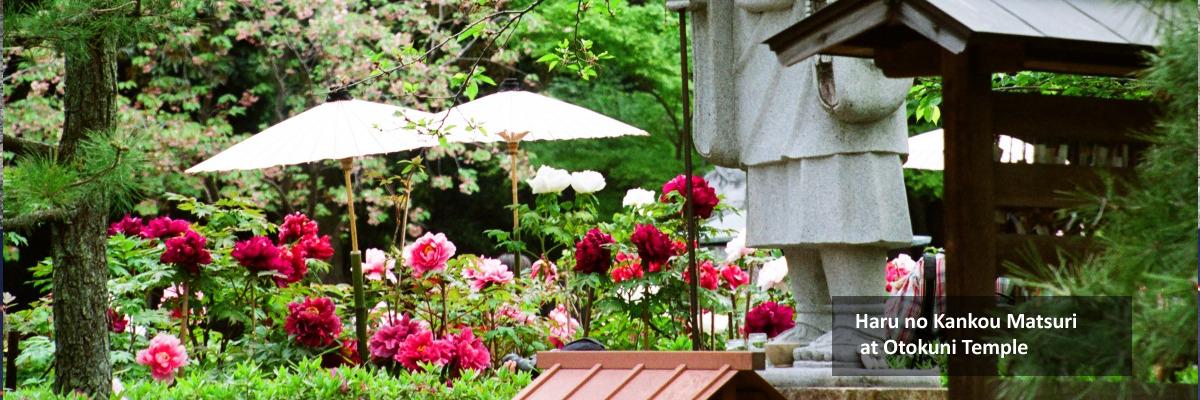 Haru no Kankou Matsuri  at Otokuni Temple